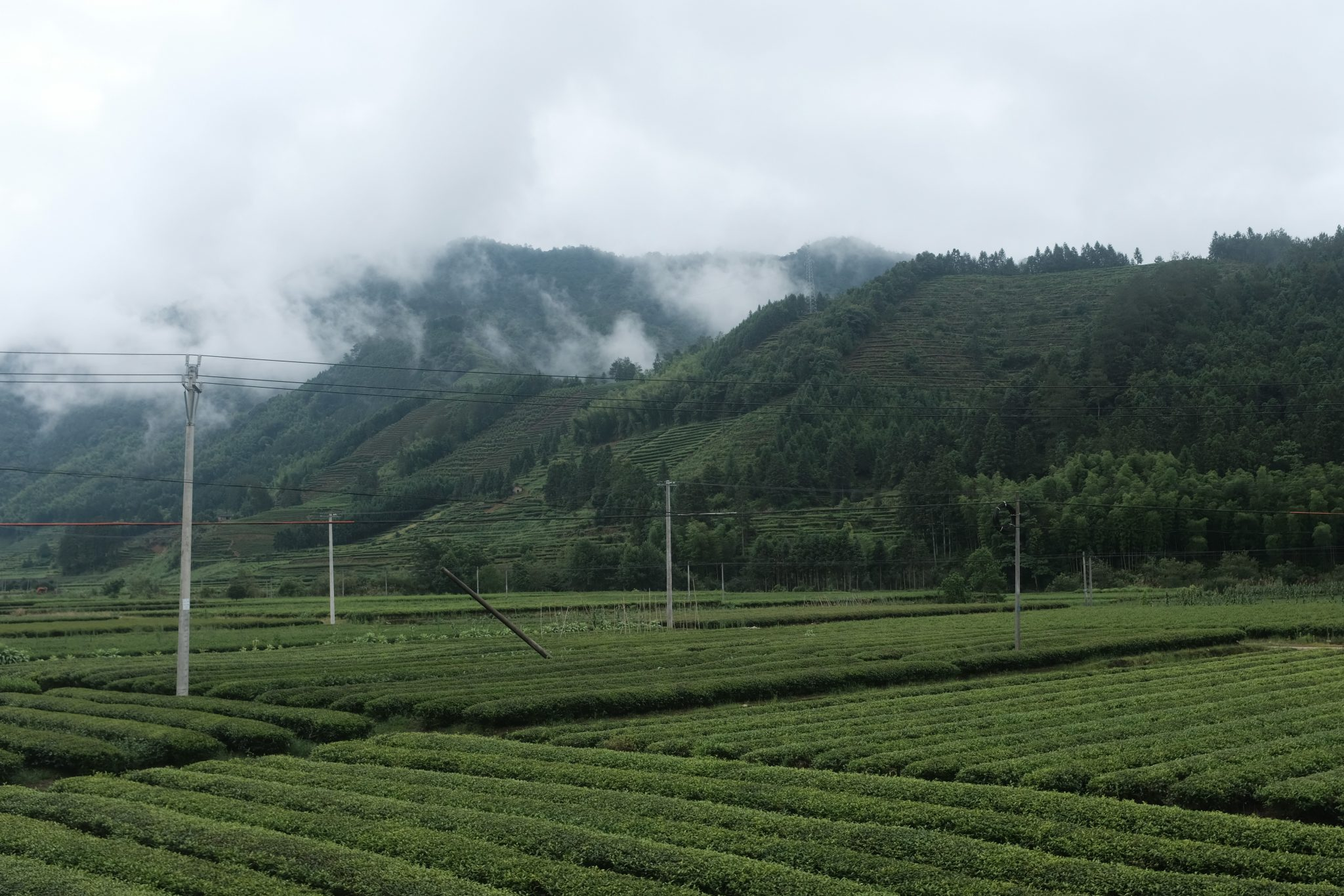 wuyishan – floder och berg tebutik